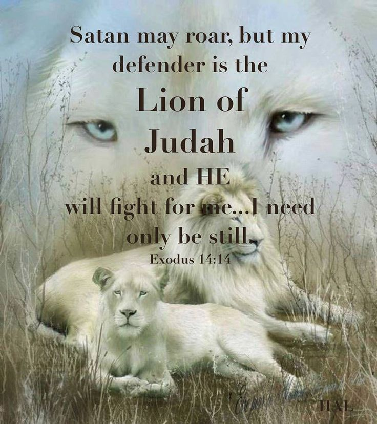 Great Lion of Judah! God is .. my Lion Protector. Our Lion God will protect all who call upon His Name. Whatever troubles come our way, we can reach for GOD's mane... God covers and defends His cubs