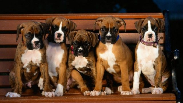 Cute Boxers