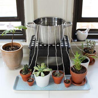 DIY self-watering wicking system. Wollfaden oder Wollkordel naß machen und ihn ein Stück in die Erde nahe der Wurzel stopfen. Dann holt sich die Pflanze das Wasser, bzw. wird die Erde trockener, sickert entsprechend viel Wasser nach.