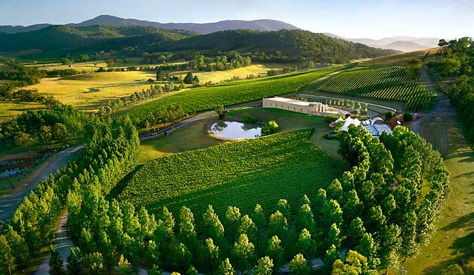 Vineyard in the Yarra Valley, Victoria