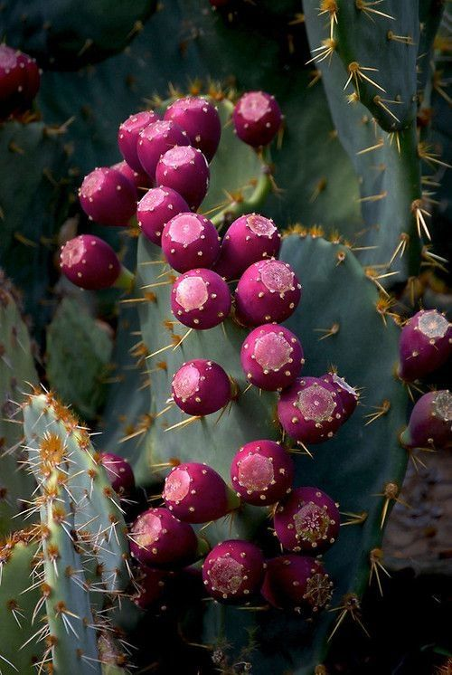 Cactus fruit, well-worth a try.