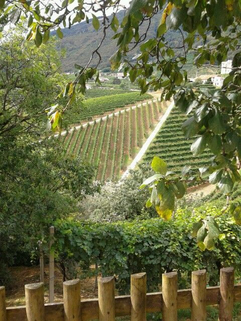 Nino Franco Winery is proud to be one of the oldest in Valdobbiadene.