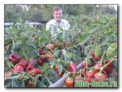 Универсальный рецепт большого урожая