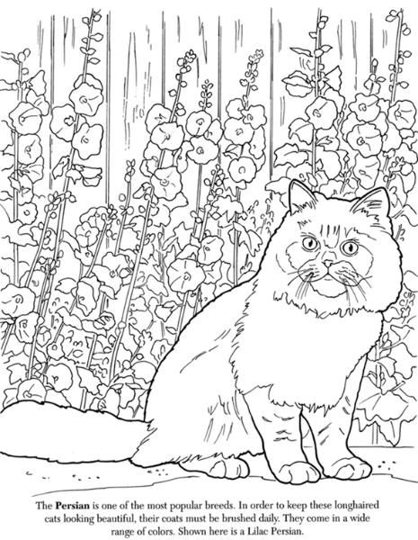 Advanced Cat Coloring Pages : Cat coloring pages colouring adult detailed advanced