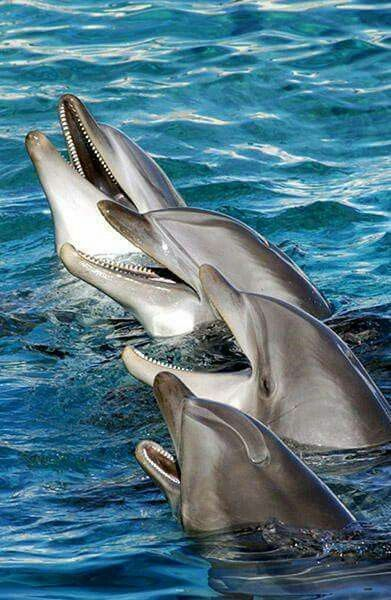 Krasny delfiny