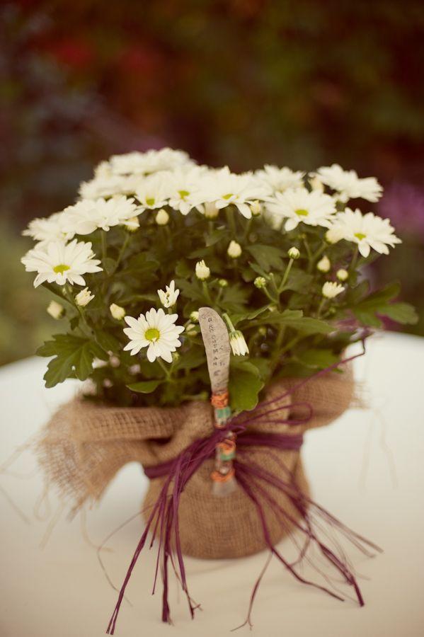 Best 25 Fall Wedding Mums Ideas On Pinterest Autumn