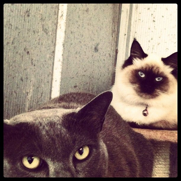 Sup cats.: Cats Pictures, Cat Pictures