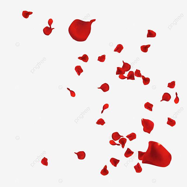 Red Rose Petals Falling And Flying Rose Petal Falling Png Transparent Clipart Image And Psd File For Free Download Rose Petals Falling Red Rose Petals Rose Petals