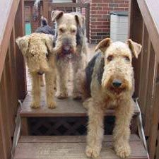 The Three Stooges? Or the welcome home committee.