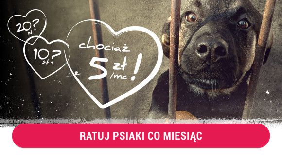 Pomagaj Codziennie - Karmimypsiaki.pl