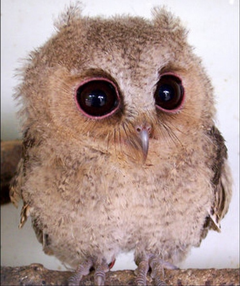 I love this sweet owl!