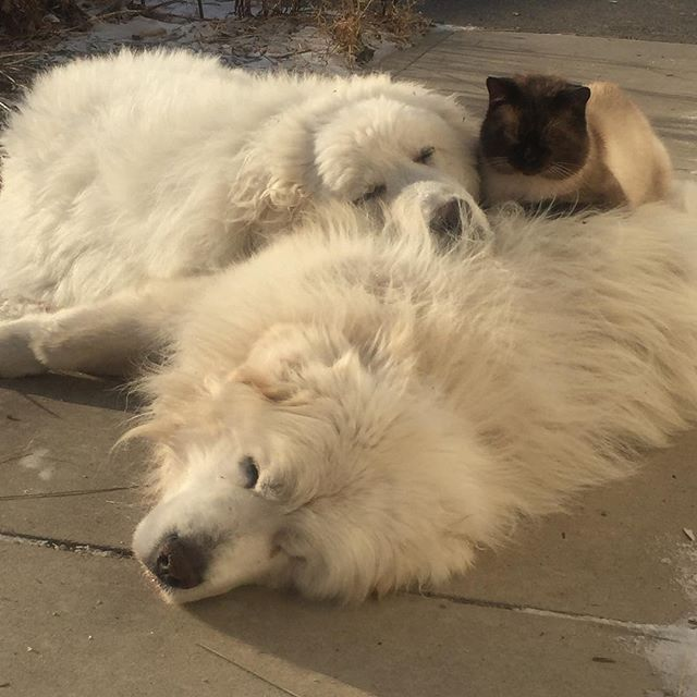 How to keep warm in the cold #snuggle #farmlifebestlife #bestpetsever (scheduled via http://www.tailwindapp.com?utm_source=pinterest&utm_medium=twpin&utm_content=post180802805&utm_campaign=scheduler_attribution)