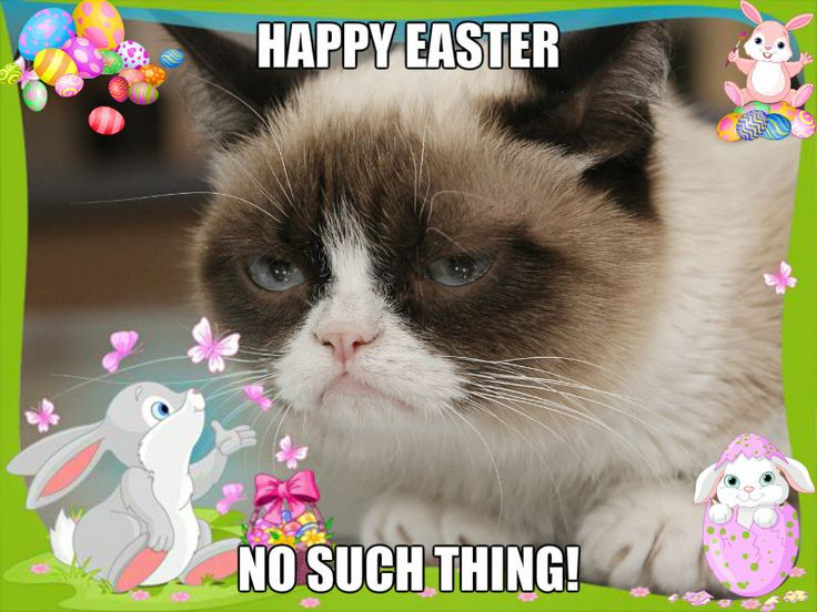Grumpy Cat Easter Meme