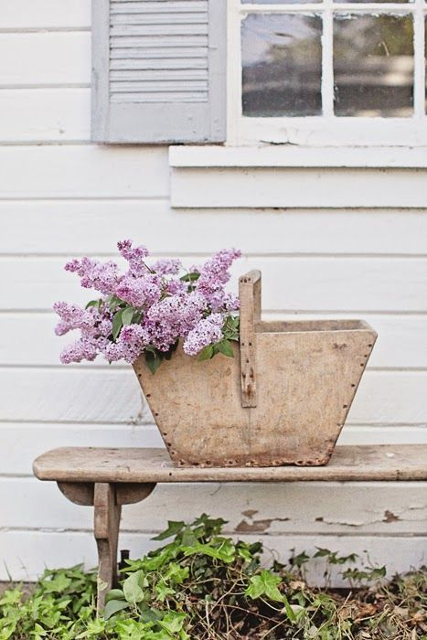 Shed, shutters, bench, trug and lilacs.
