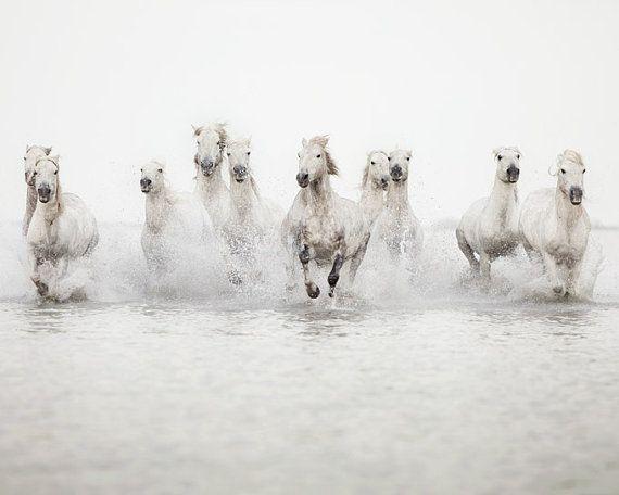 Paard Rotsvlinder Art Print fotografie door EyePoetryPhotography