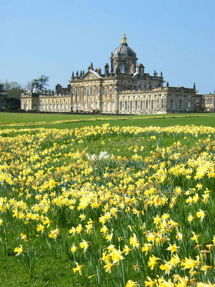 Castle Howard Daffodils stock(Yorkshire, England)by Queenselphie