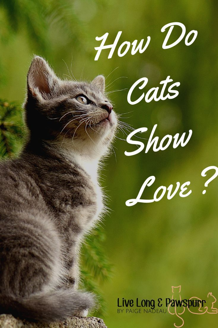 10 Ways Cats Show Their Love For You Cats Sick Cat Cat Lovers