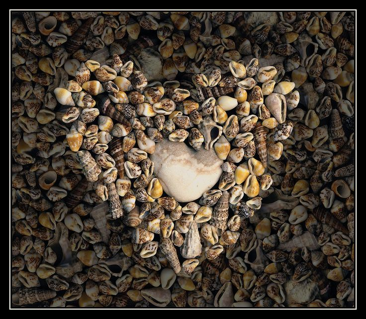 Rock with sea shells