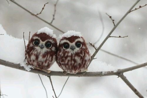 "(KO) Snow capped tiny birds. They huddle together for warmth and shiver, all the while chanting, ""c'mon Spring""!"