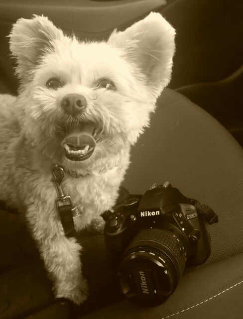 Photography assistant.
