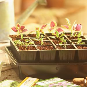 Start Seeds at Home with a Seed Starter Kit | Garden Club