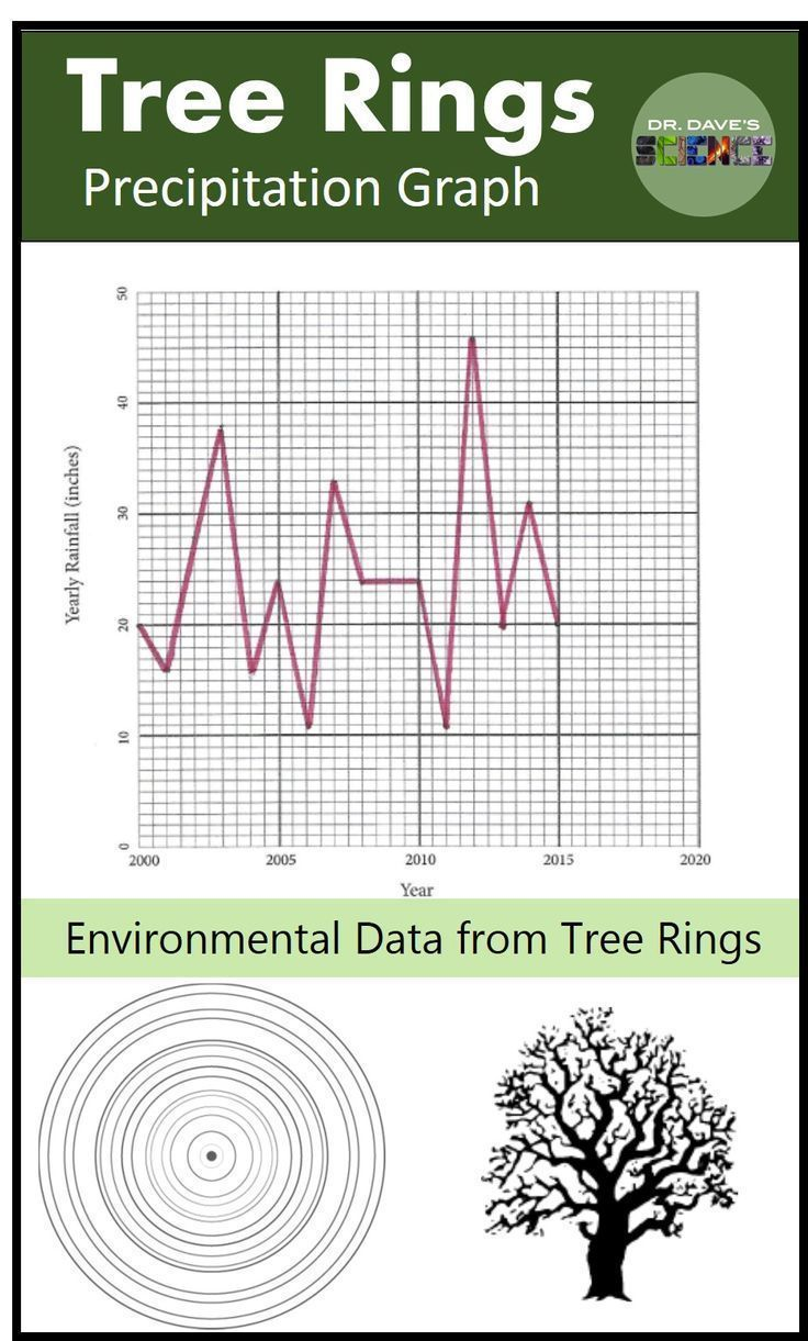 Ecology activity for Earth science. Tree ring and environmental science.  Precipitation graph from tree rings.