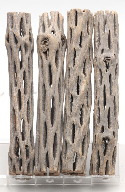Cholla Cactus Skeleton Blanks for a headboard maybe ...