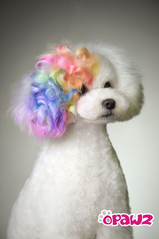 1000 ideas about dog grooming styles on pinterest dog for A perfect pet salon
