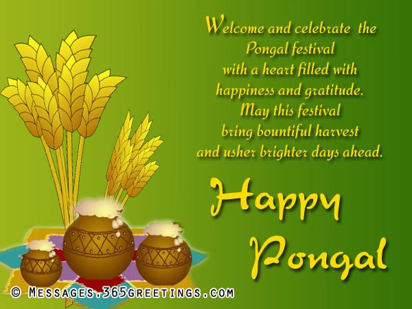Thai Pongal is a Tamil harvest festival. Thai Pongal is a four-day festival which according to the Gregorian calendar is normally celebrated from January 14 to January 16. This corresponds to the last day of the Tamil month Maargazhi to the third day of the Tamil month Thai. This post here will help you with happy pongal status, happy pongal wishes, happy pongal quotes, happy pongal quotes, happy pongal sayings, happy pongal greetings, pongal wishes, pongal quotes, pongal status, pongal…