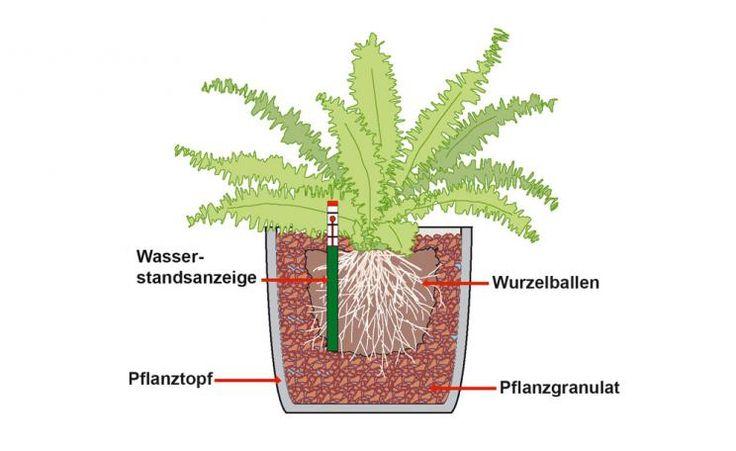 Hydrokultur