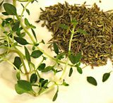 Thyme Varieties and Facts