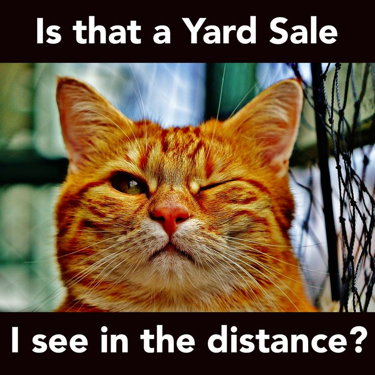 Funny Yard Sale Meme : Best funny yard sale signs images on pinterest