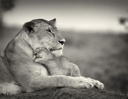 Baby lion!!!
