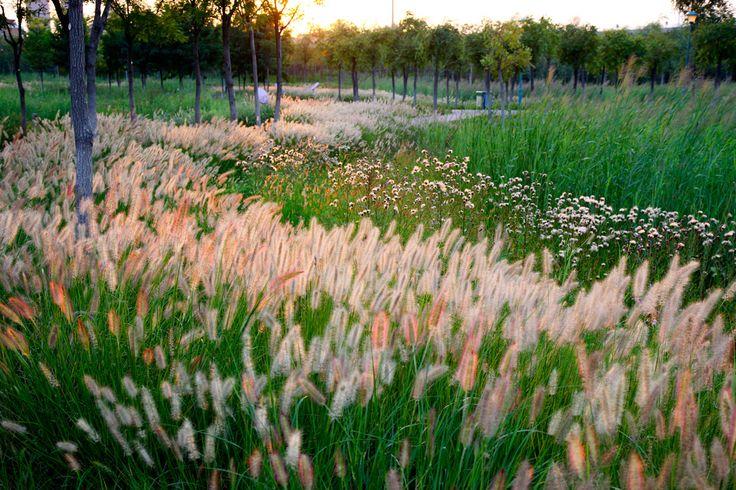 11-turenscape-landscape-architecture « Landscape Architecture Works | Landezine Landscape Architecture Works | Landezine
