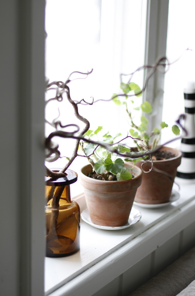 Love the accent of twigs next to these windowsill plants