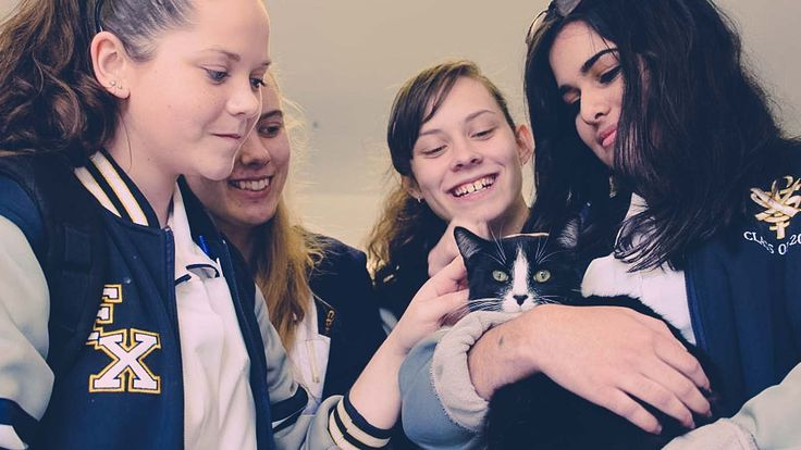 Now for a lot of kids around Australia exams are just around the corner. It can be an incredibly stressful time. So one school in Canberra has come up with a unique way to help its students relax. Kittens!