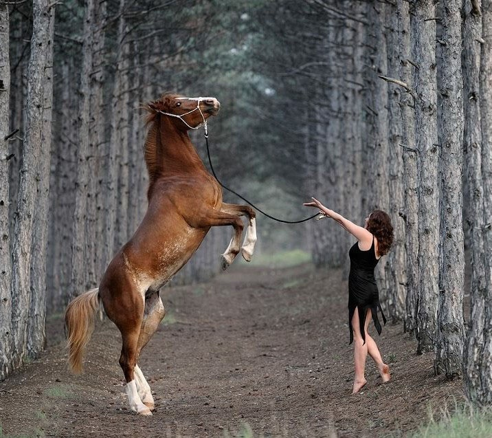 Beautiful! stunning, horse, stejlende, girl, female, woman, tree view, dirt road, photo, cute, nuttet, adorable, fluffy.