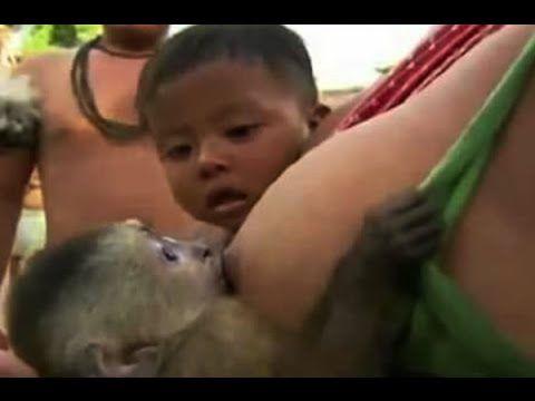 Breastfeeding Animal Babies Live грудное вскармливание.母乳, 모유 수유, ぼにゅう, الرضاعة الطبيعية, เลี้ยงลูกด้วยนม นม.