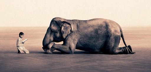 young monk reads to elephant.Photos, Elephant, Snow, Ansel Adam, Inspiration Photography, Gregory Colbert, Amazing Animal, Colbert Ash, Gregorycolbert