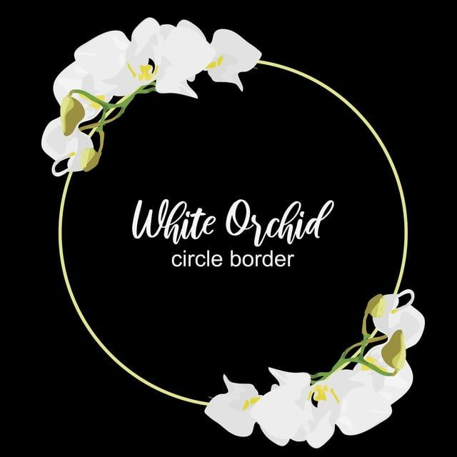 الإطار دائرة زهرة الأوركيد التصميم زهري الصيف خلفية زهر الحدود بطاقة نبات ربيع استوائي توضيح زهرة إكليل معزول أبيض مس Flower Circle Orchid Flower White Orchids