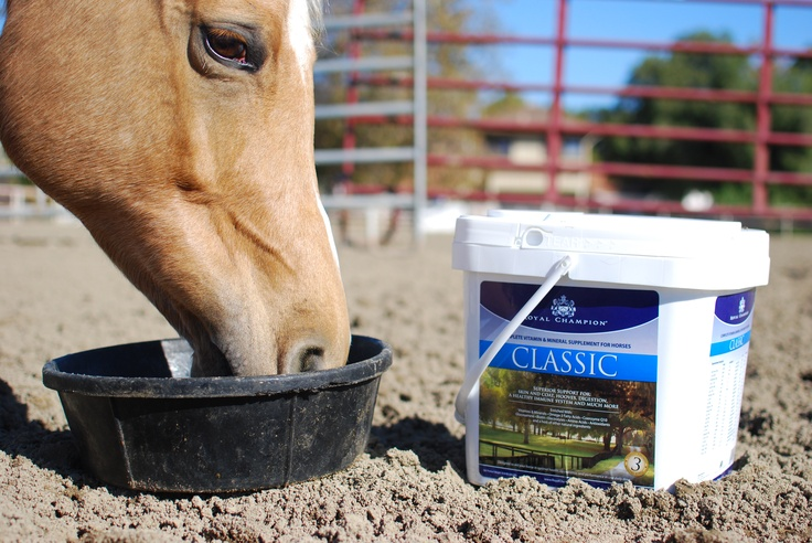 Royal Champion Classic is a complete vitamin and mineral formula with numerous health benefits for all horses. Classic provides essential support for hooves, coat, digestion, the immune system, and much more. Classic features Vitamins and Minerals, Omega-3 Fatty Acids (Cod Liver Oil), CoQ10, Glucosamine, Biotin, Electrolytes, Essential Amino Acids, Antioxidants, and a host of other natural ingredients.