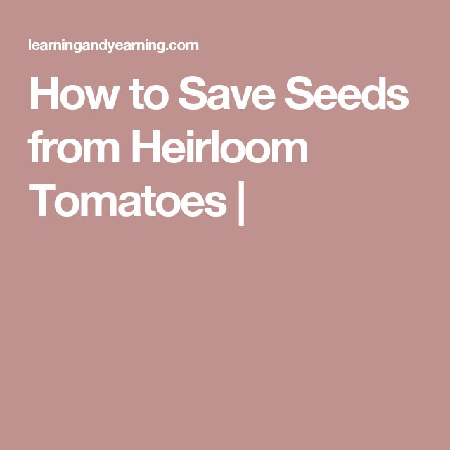 How to Save Seeds from Heirloom Tomatoes |