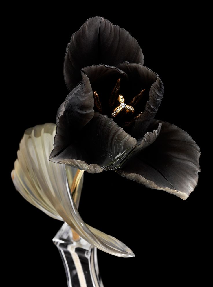 Black tulip...with jewel-encrusted anthers. Or is that a ring? Very Plutonian (Hades ruled the underworld and, hence, all the riches in it).