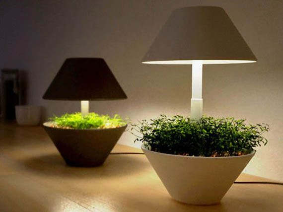 Trying to find the best way to grow herbs indoors without much natural light