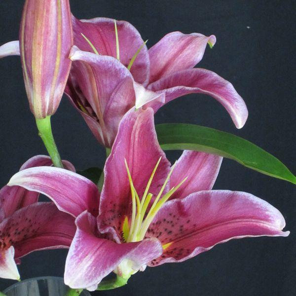 Flowers in Season: March | Wedding Planning, Ideas & Etiquette | Bridal Guide Magazine