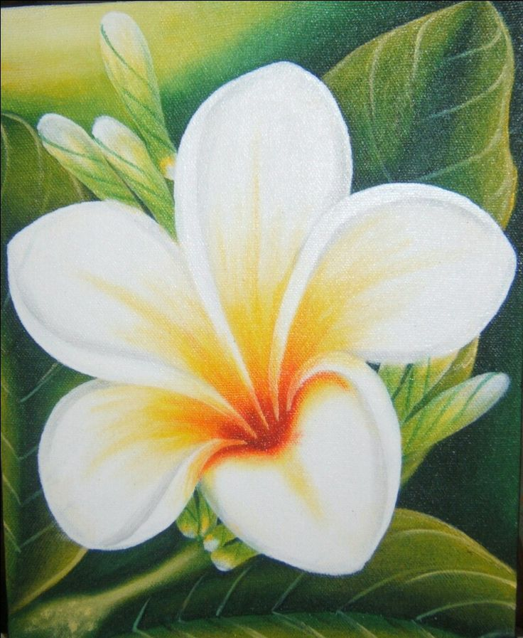 Kamboja Flower Art Drawing Painting In 2019