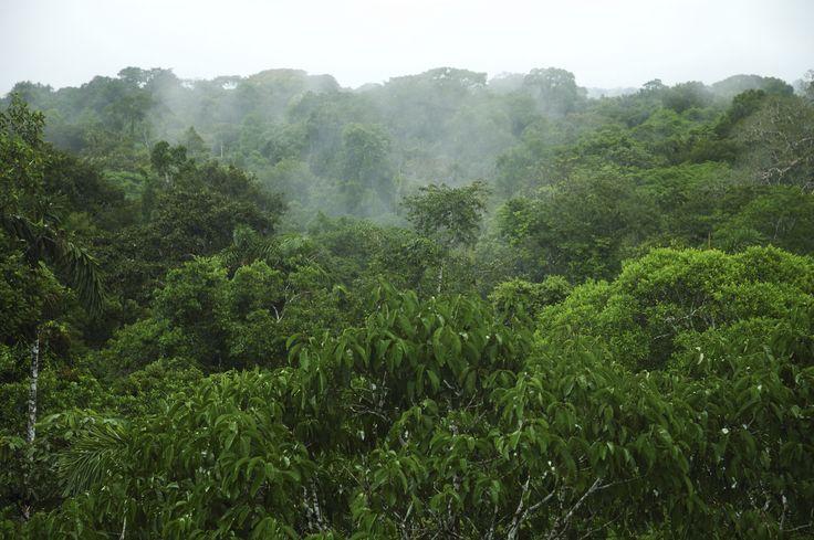 Amazonas er verdens største regnskov og verdens vandrigeste flod med utallige bifloder, som løber gennem junglen. Stedet er derfor det helt rette til en autentisk regnskovsoplevelse.