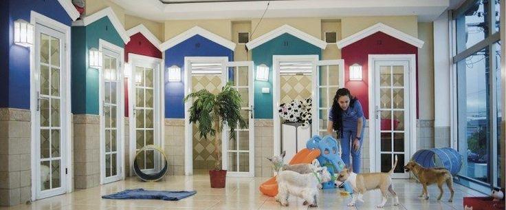 Resultado de imagen para hotel para perros