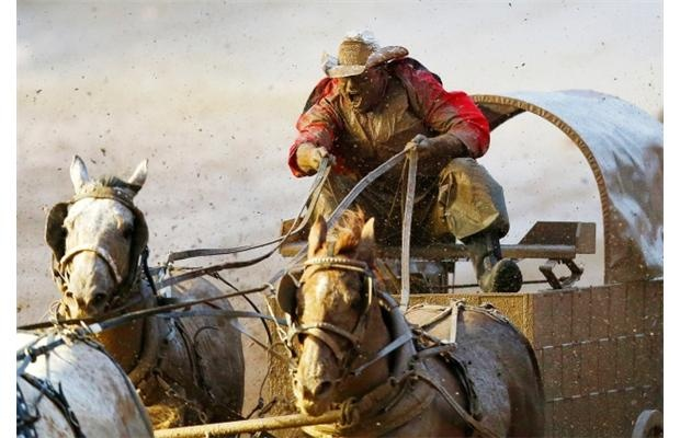 19 Best Images About Chuckwagon Racing On Pinterest