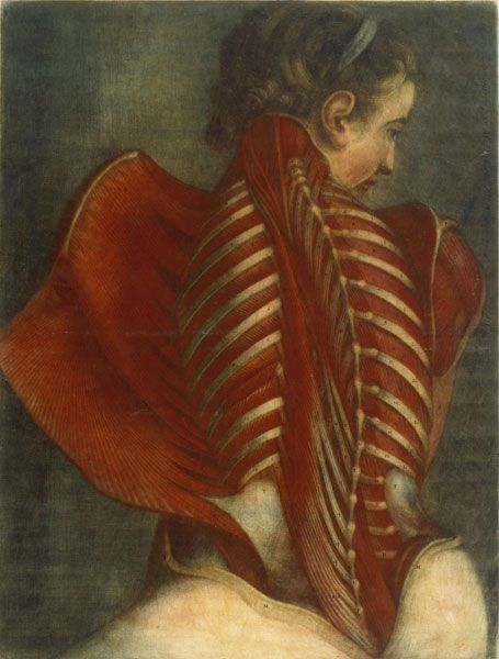 foxesinbreeches:    Anatomy of a Woman's Spine by Jacques Fabien Gautier d'Agoty, 1746    fascinating depiction!